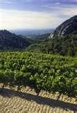 013 – El Girondas en un vino francés procedente de...  (A) = Borgoña  (B) = Cotes de Rhone  (C) = Burdeos