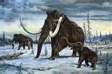 """12 - Eran recolectores y cazadores primarios; conocían y utilizaban el Fuego a discreción. Tenían una capacidad intelectual de acuerdo al tamaño de cerebro, que era mucho mayor que la de sus probables antepasados, los Australopitecos, se les denomina también """"Homo Erectus"""". El clima era muy frío y húmedo, en la fauna existen grandes mamíferos como el Mamut, Reno y Bisonte."""