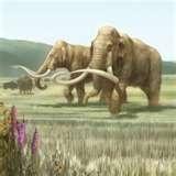 13 - Probablemente el Homo Erectus, inició su vida en el África, pero se han encontrado restos de estos primitivos antepasados en lugares muy alijados de sus inicios como China y Java. Sobrevivieron hasta bien entrada la época glaciar.